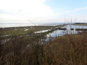 Eskilsø naturpleje