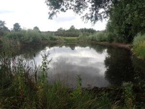 Ren sø